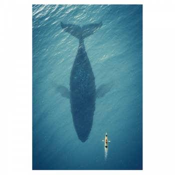 Whale AluArt