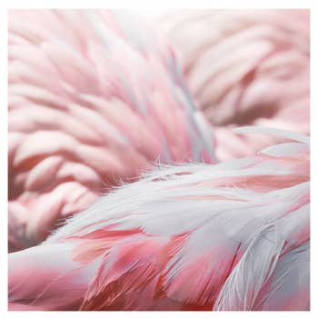 Flamingo Feathers Wall Art