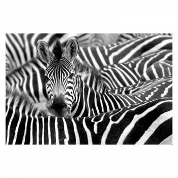 Wild Zebra Wall Art