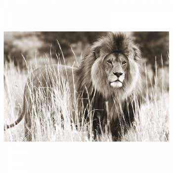 Lion AluArt