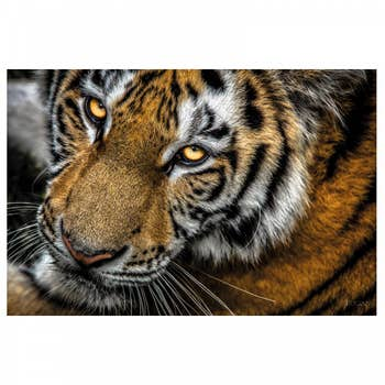 Tiger AluArt
