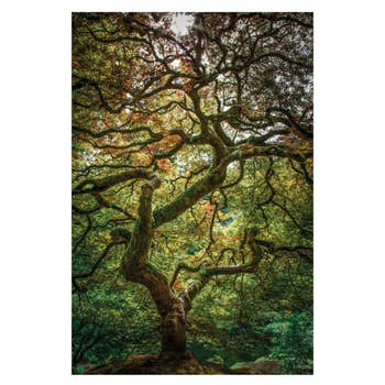 Maple Tree AluArt