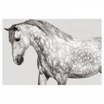 Andalusian Pony Wall Art
