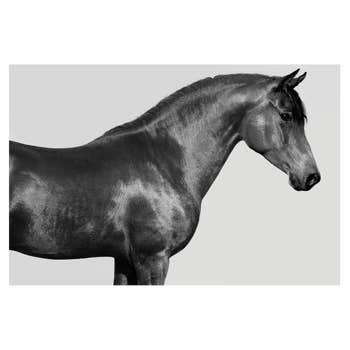 Orpheus Arab Horse AluArt