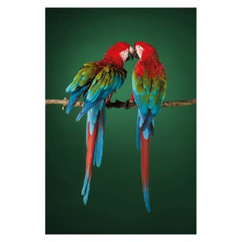 Two Scarlet Macaws AluArt