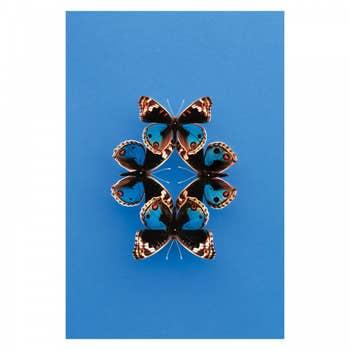 Bold Butterfly Blue Wall Art