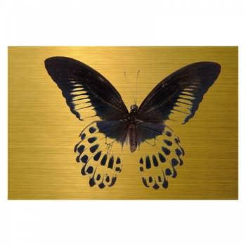 Butterfly Papilio AluArt