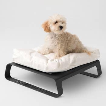Montreal Black Pet Bed